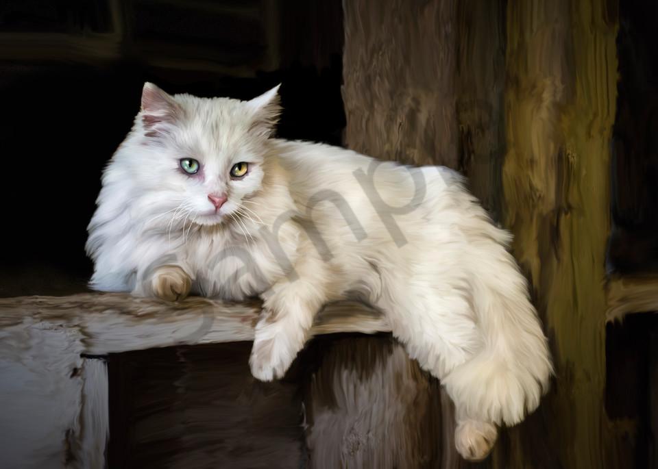 White barn cat