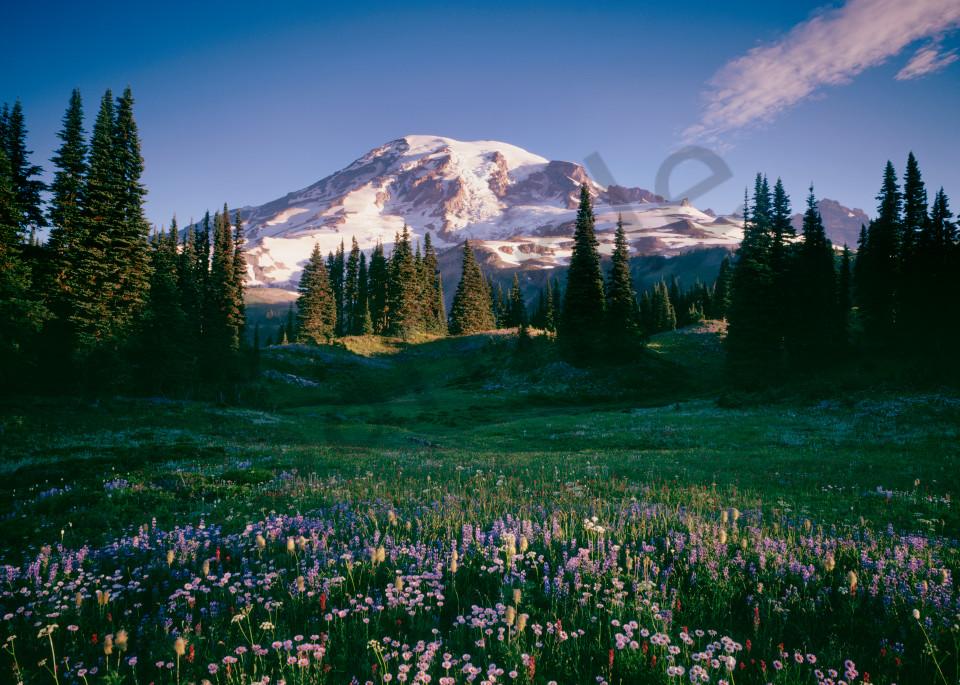 Fine art print of a wildflowers and Mt. Rainier