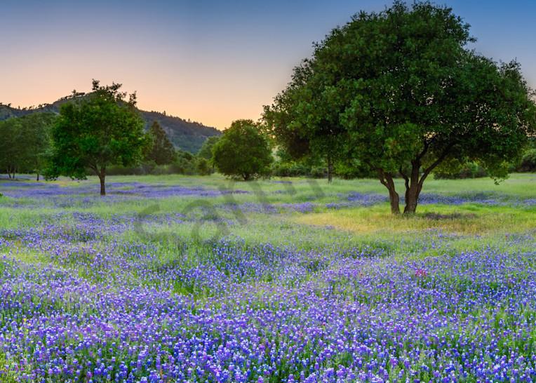 The Dream Field Art   Scott Cordner Photography
