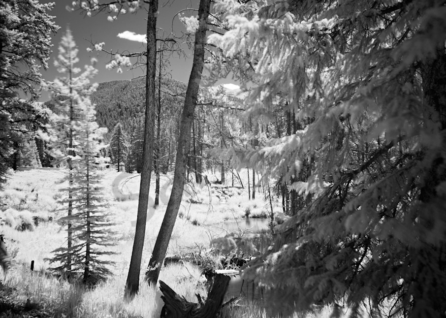 9368 Trees And Beaver Ponds Art | Cunningham Gallery