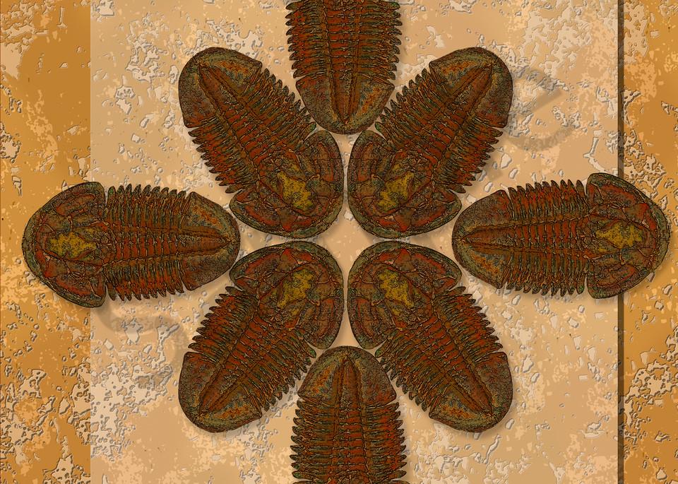 Asaphiscus Fossil Trilobite Wheel