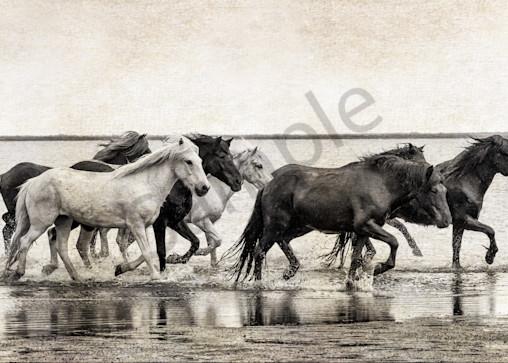 Ancient Equus