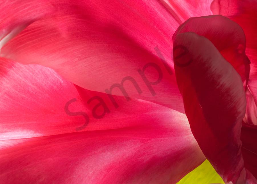 Parrot-Tulip-#4
