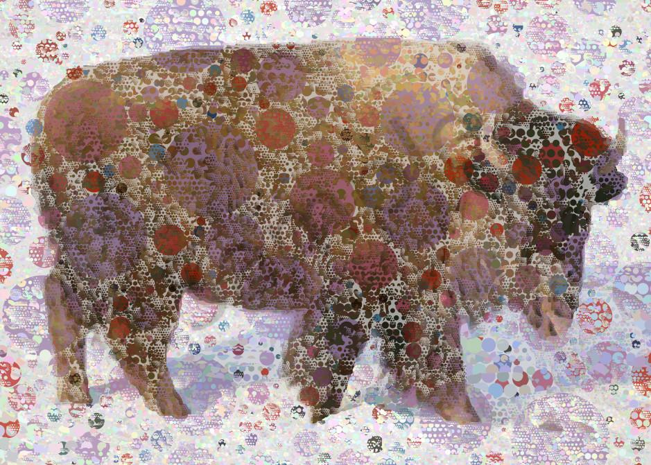 Buffalo Canvas Art