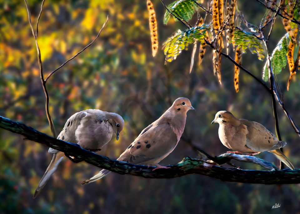 Doves On Branch Art | MDM photo