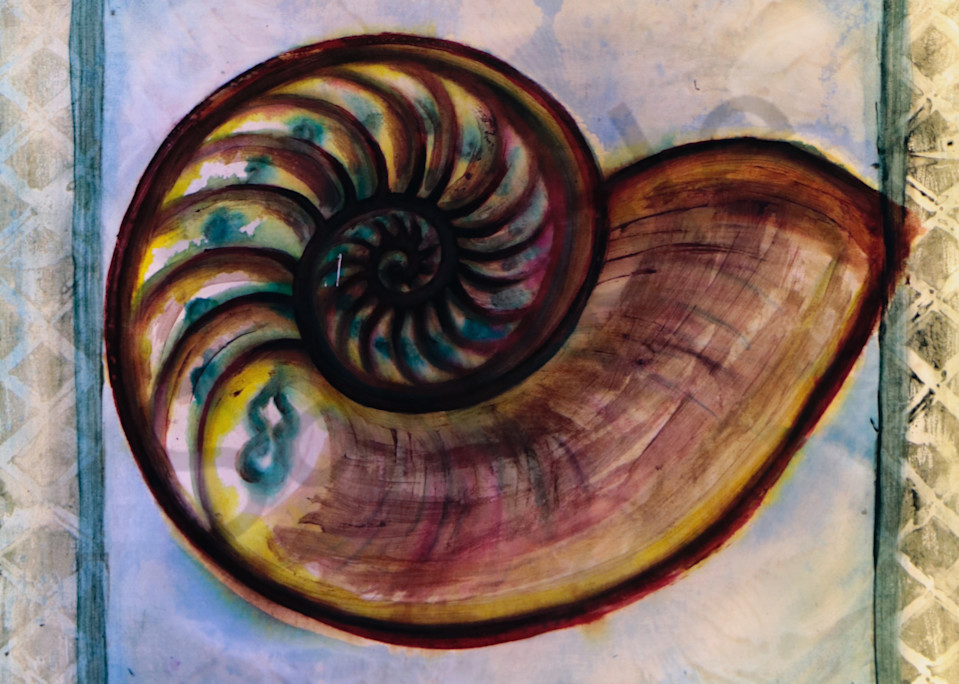 Nautilus Shell Print for Beach on Canvas, Paper and More