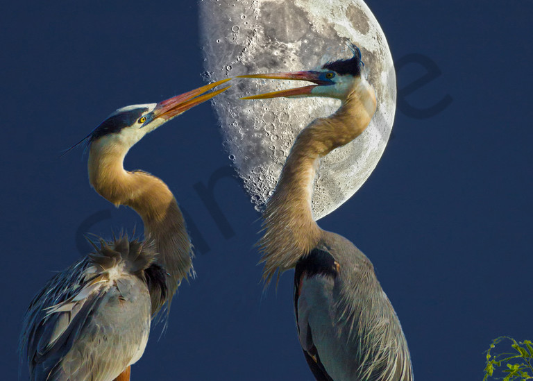 Midnight Blues Photography Art | John Martell Photography