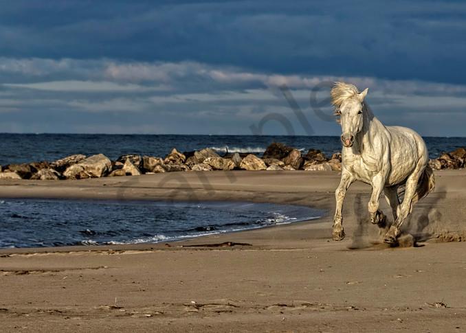 Blanc Beauty Photography Art | John Martell Photography