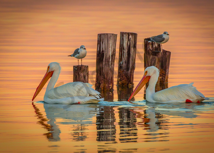 Whites In Gold Photography Art | John Martell Photography