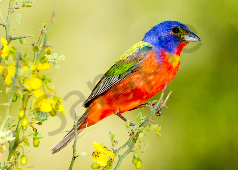 Painted On A Perch Photography Art | John Martell Photography