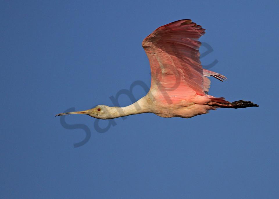 Flying High Photography Art | John Martell Photography