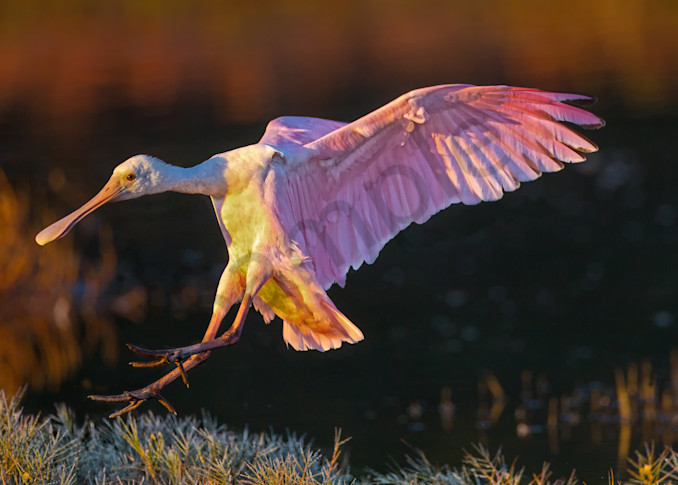 First In Flight Photography Art | John Martell Photography