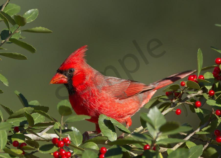 Berry Cool Photography Art | John Martell Photography