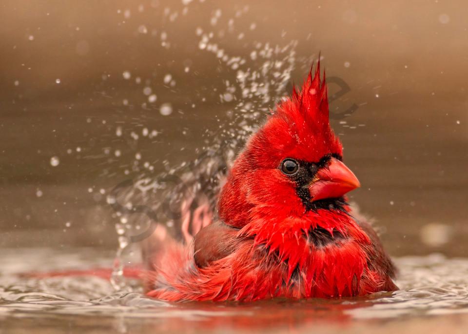 Splish Splash Photography Art | John Martell Photography