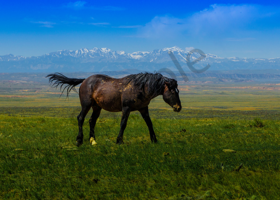 Home On The Range Photography Art | John Martell Photography