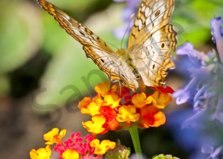 Colorful Landing Pad - butterfly - fine art prints - photography by JP Sullivan