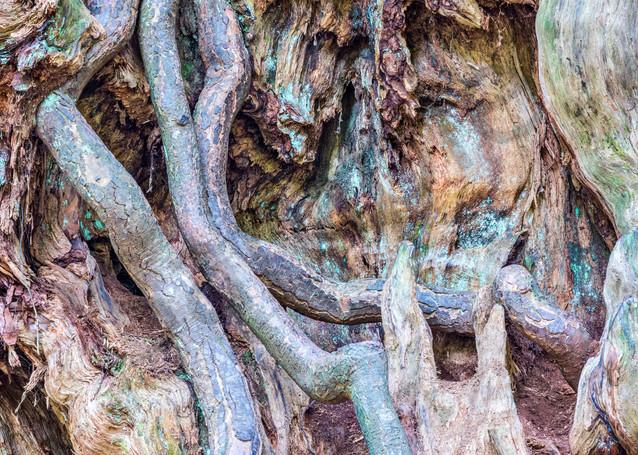 Intertwined Photography Art   frednewmanphotography