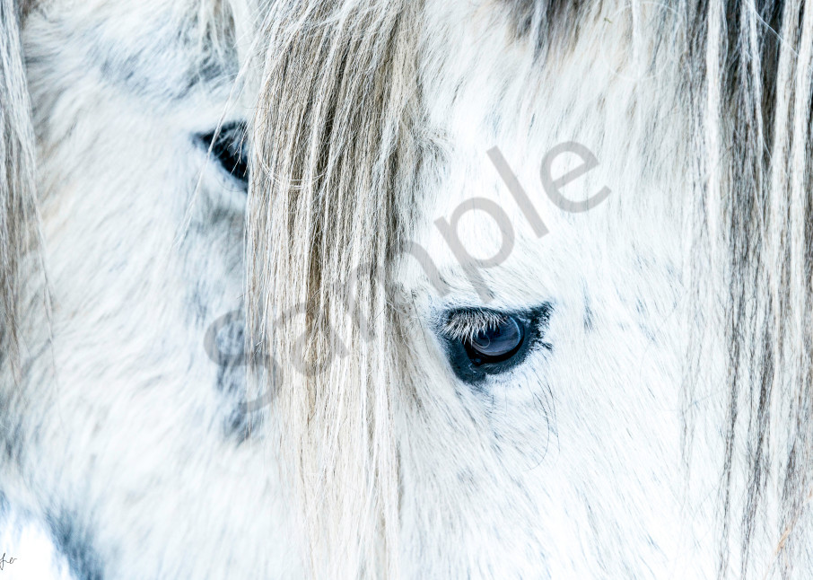 Fine art photograph of two white horses with big mane, close-up of head