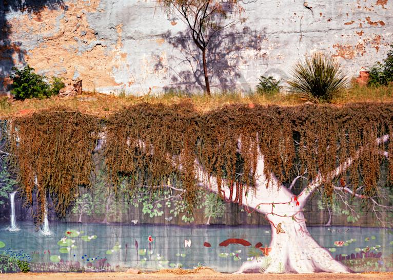White Tree Photography Art | frednewmanphotography