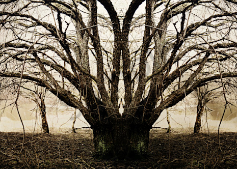 The Weeping Tree Photography Art | Sage & Balm Photography