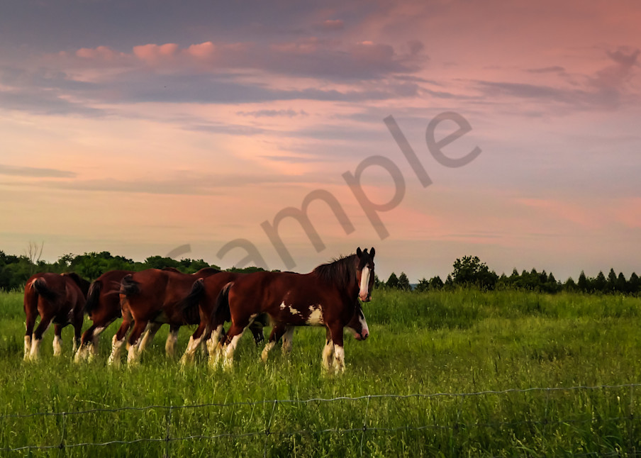Sunset Horses Photography Art | Sage & Balm Photography