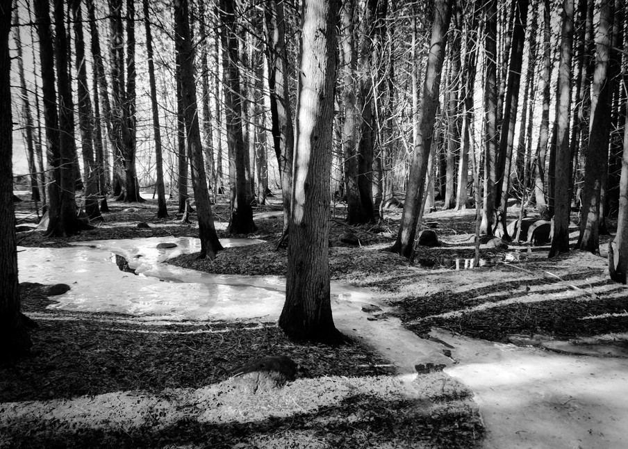 Black & white forest photograph with a river of ice for sale as fine art by Sage & balm