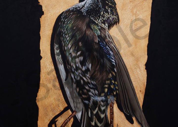Starling  Art   Warfield Art and Design