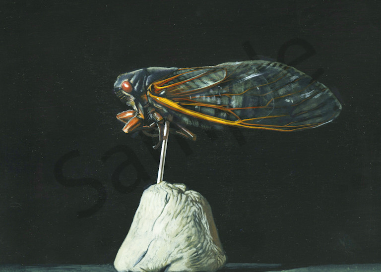 Cicada Art | Warfield Art and Design