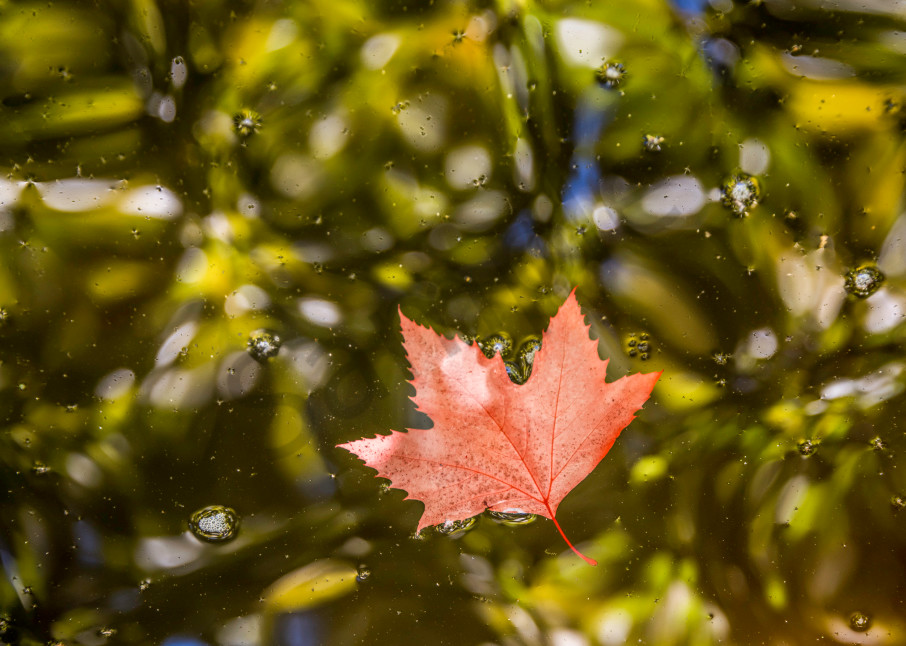Red leaf floating on abstract looking water.