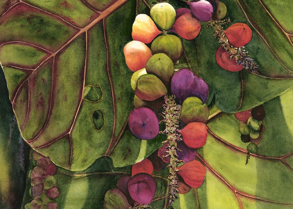 tropical, art, prints, sea grapes