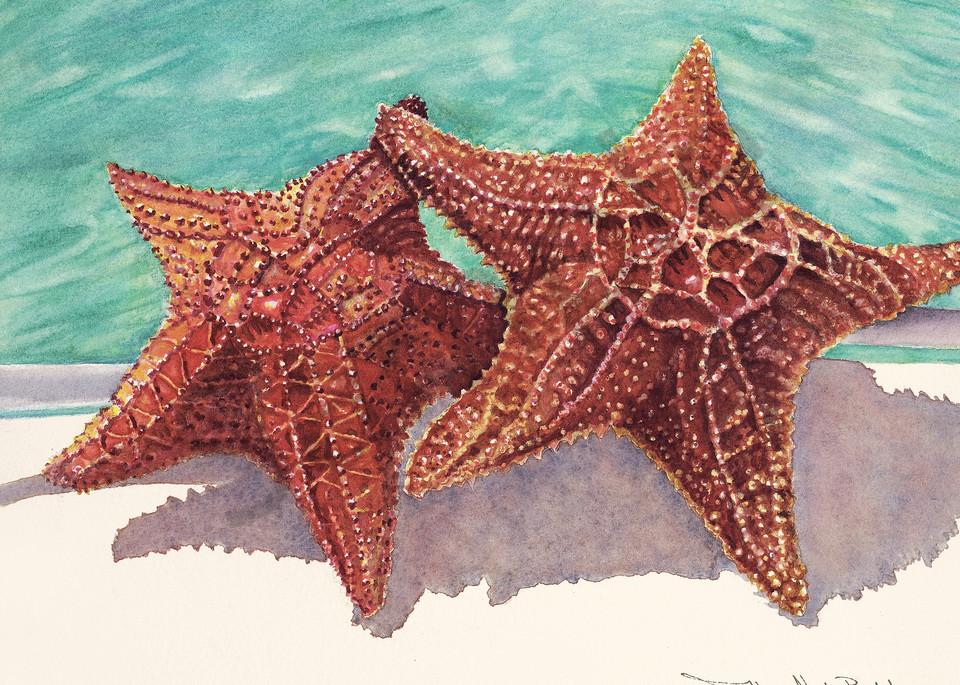 sea stars, bahamas, art, prints,