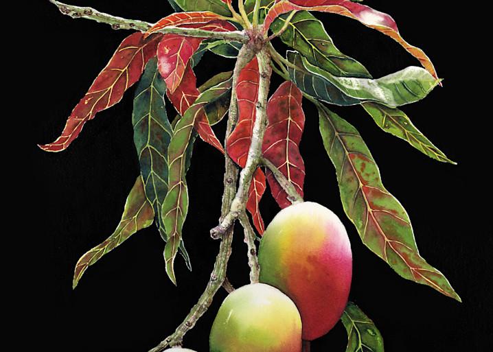 Garden Of Moonlit Mangos Art   ColleenNashBecht