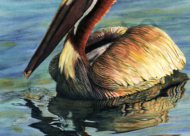 Pelican Art | ColleenNashBecht