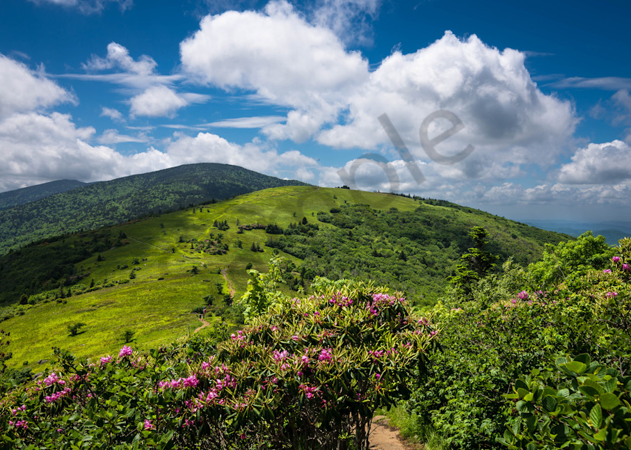 Summer on Roan Mountain Photograph for Sale as Fine Art