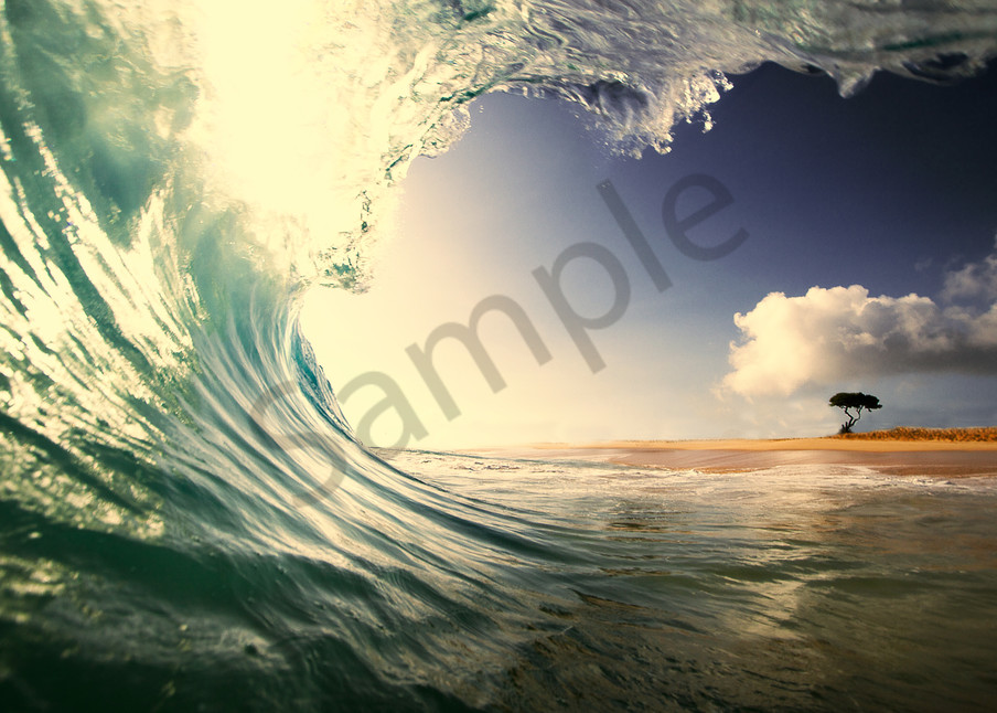 wave and the lonely tree