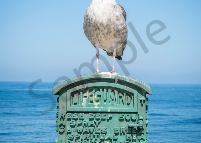 Guard on Duty, seagull photo for sale | Susan J Photography