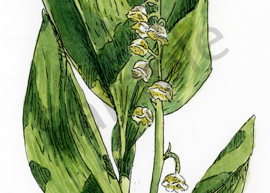 May   Lily Of The Valley Art   Geoffrey Butz Art & Design Inc