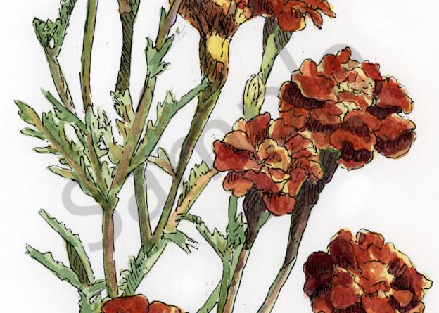 Oct   Marigold Art | Geoffrey Butz Art & Design Inc