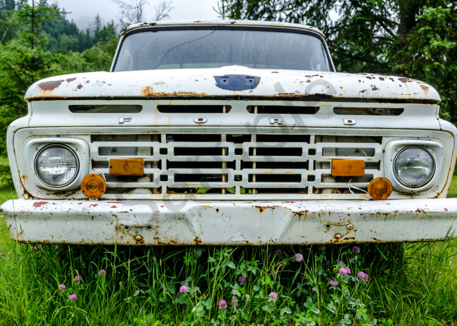 Old white Ford car with purple flowers in front in an art photograph