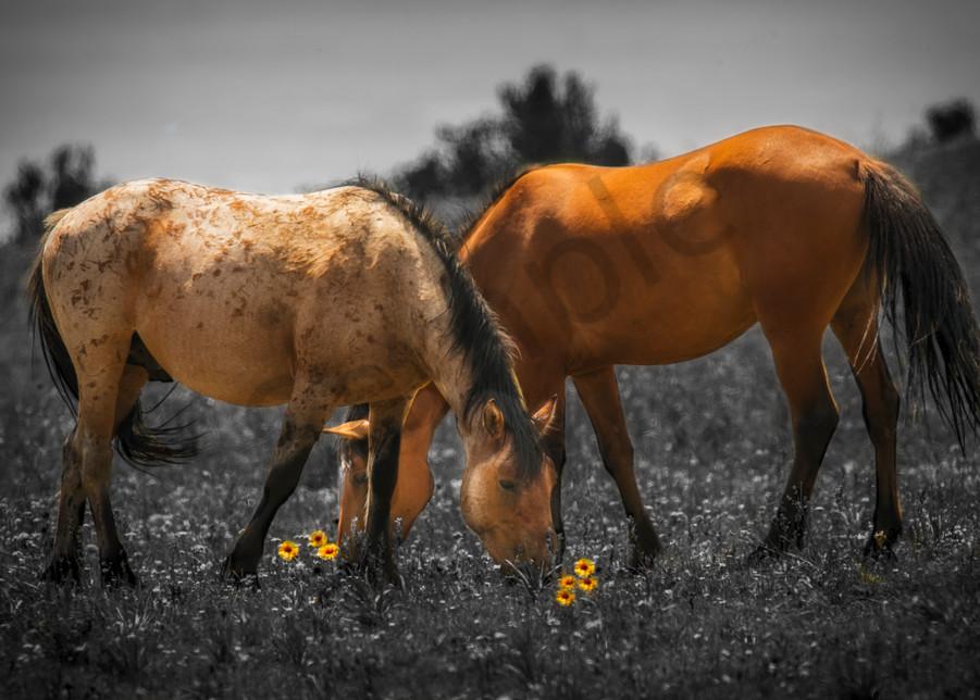 Wild Mustangs of Montana - Art prints - photography