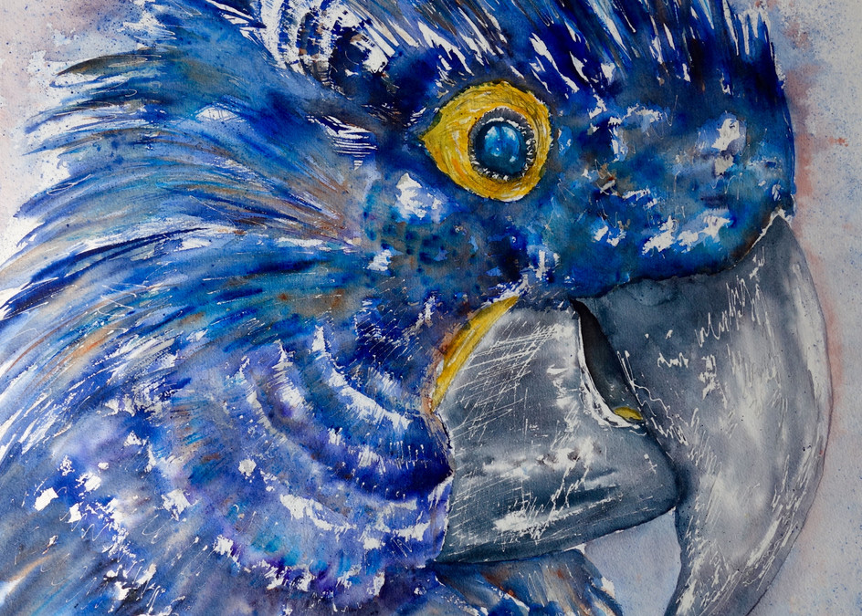 Antoine the Hyacinth Macaw