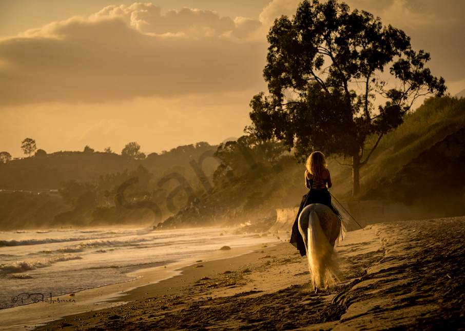 Golden Hour Photography Art | HoofPrintsFineArt
