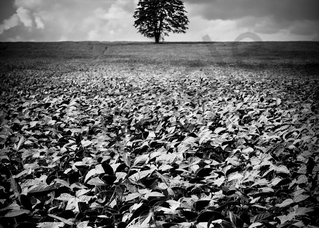 The Lone Tree Photography Art | Sage & Balm Photography