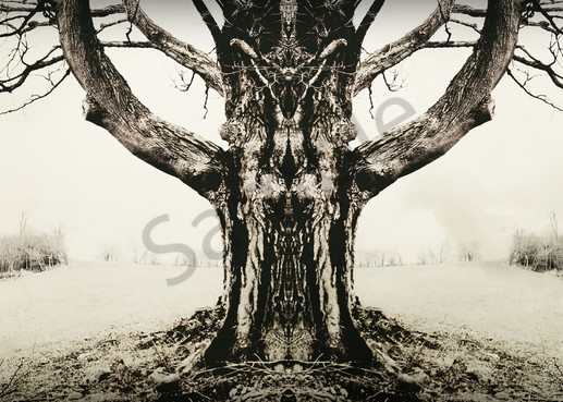 Fantastic Tree Photography Art | Sage & Balm Photography