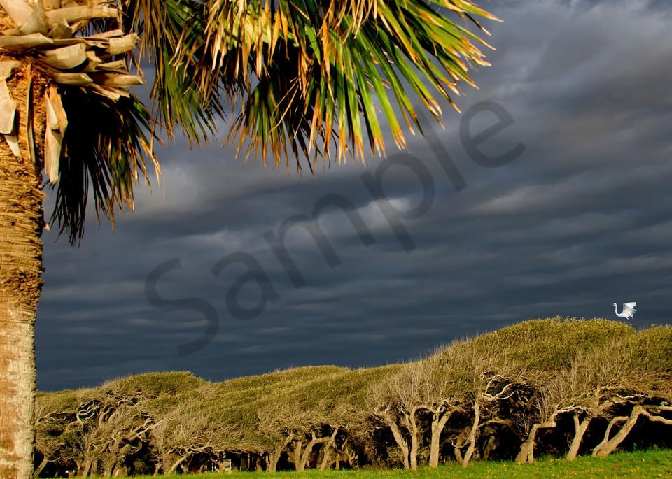 Rockport Rookery Photography Art   John Martell Photography