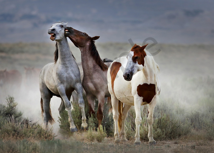 Wild Horses Art | Cunningham Gallery