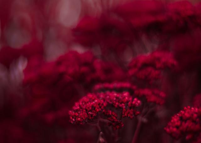 Abstract Sedums Photography Art | Sage & Balm Photography