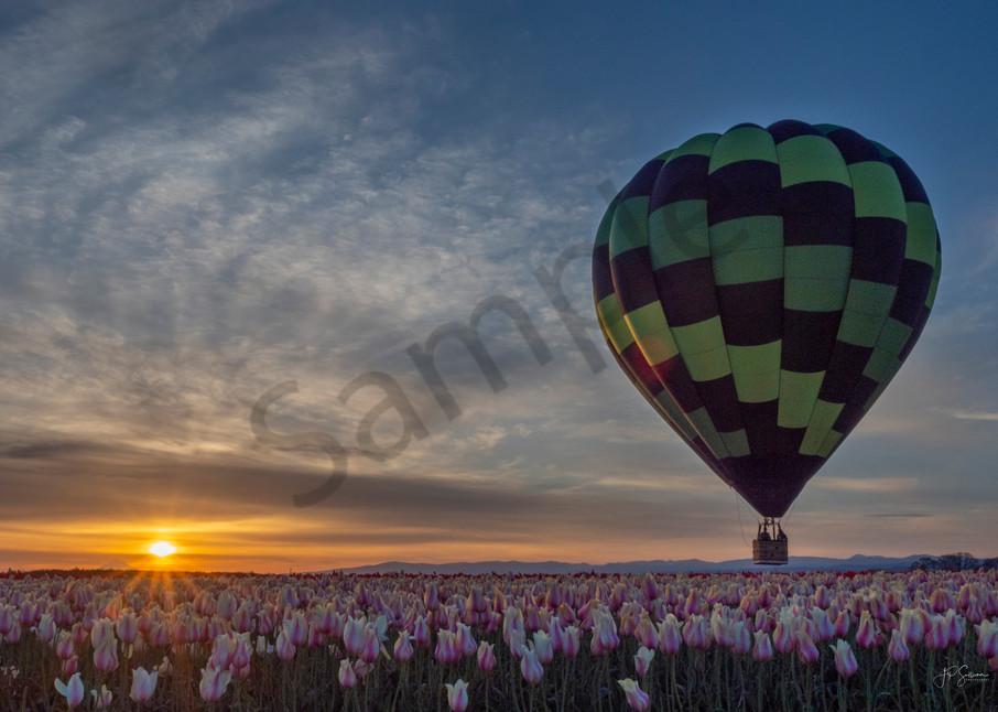 Sunrise illuminating a tulip field - fine art photography - by JP Sullivan Photography Inc.