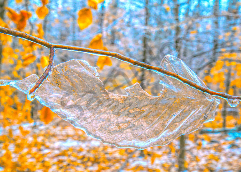 Frozen Remains|Fine Art Photography by Todd Breitling|Trees and Leaves|Todd Breitling Art