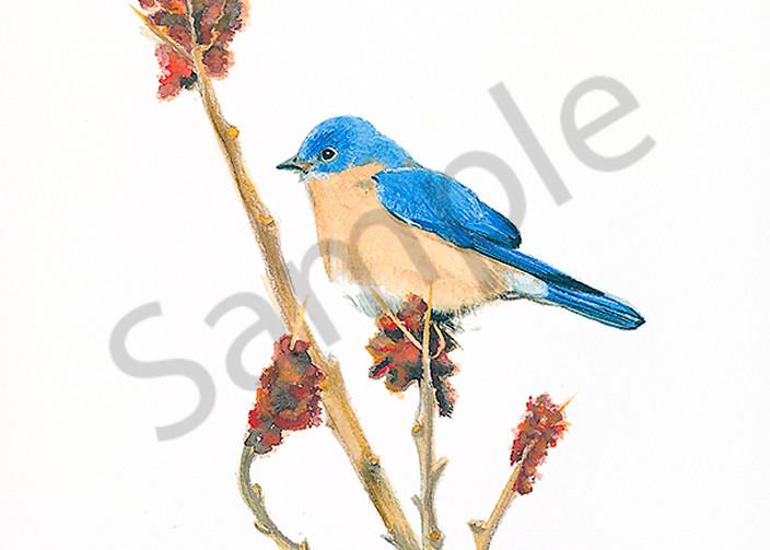 Bluebird #2 Art | Digital Arts Studio / Fine Art Marketplace